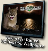 Picture copied from Wild Heart Ranch Website.