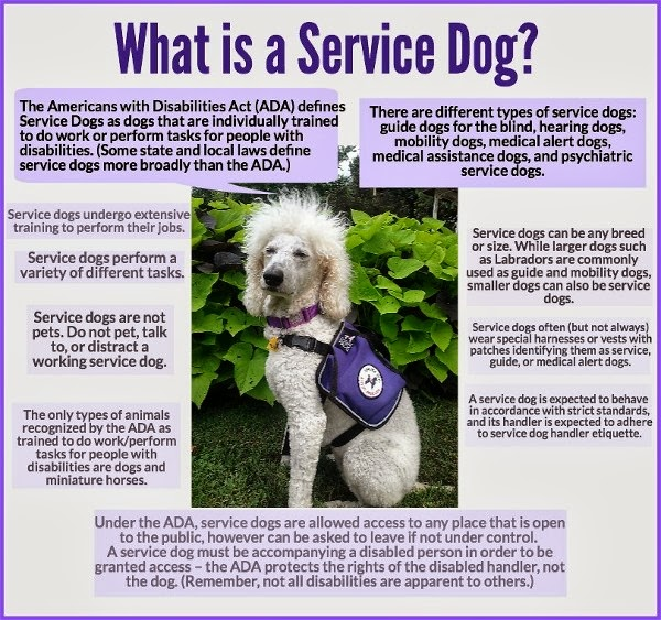 Medical Service Dog Certification