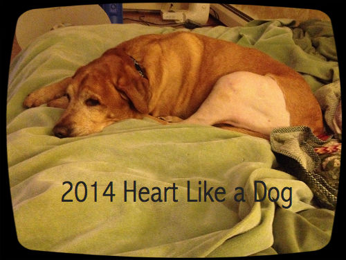 canine acl injury  surgery