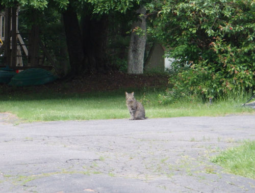 A bolder cat, who openly stared at us.