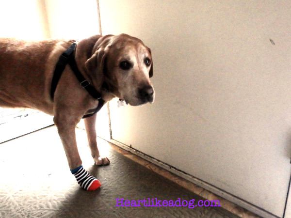Can Dogs Pass Socks