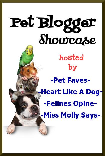 Pet Blogger Showcase 2