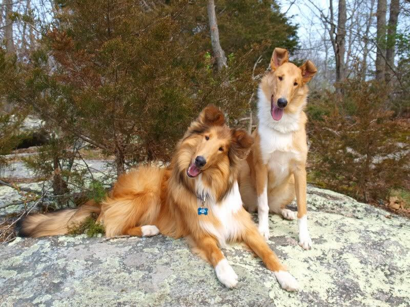 all-things-collies-9-17-16