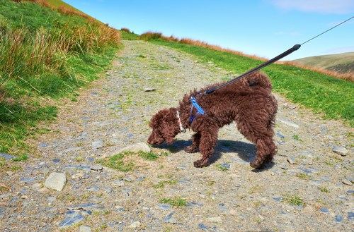 Image Result For Woof Dog Training