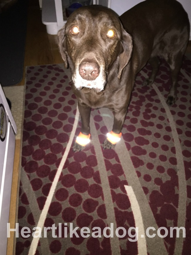 Image Result For Leashes Dogs Can